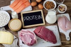 Best Protein Range For Body